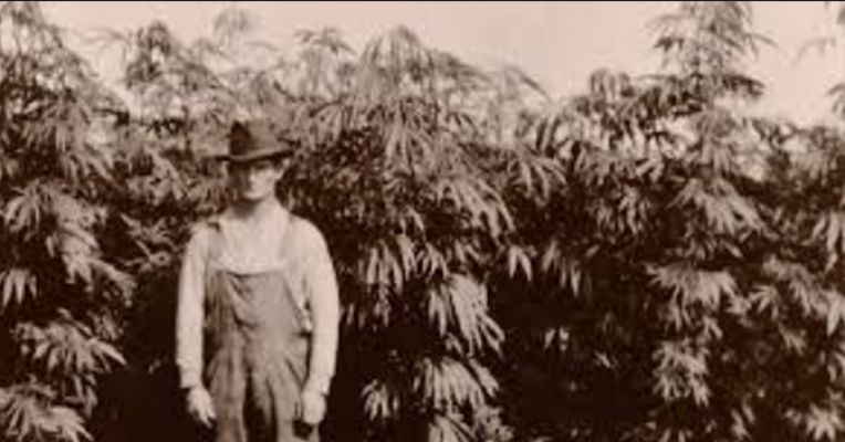 the history and major contribution of marijuana Explore the legacy and history of the legend a detailed biography, interactive timeline, map, awards and honors, the bob marley lifestyle and more show navigation hide navigation home life & legacy history charity #share1love media news tour history shop.